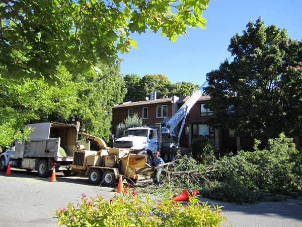 Calgary Tree Removal Business for sale  edmonton