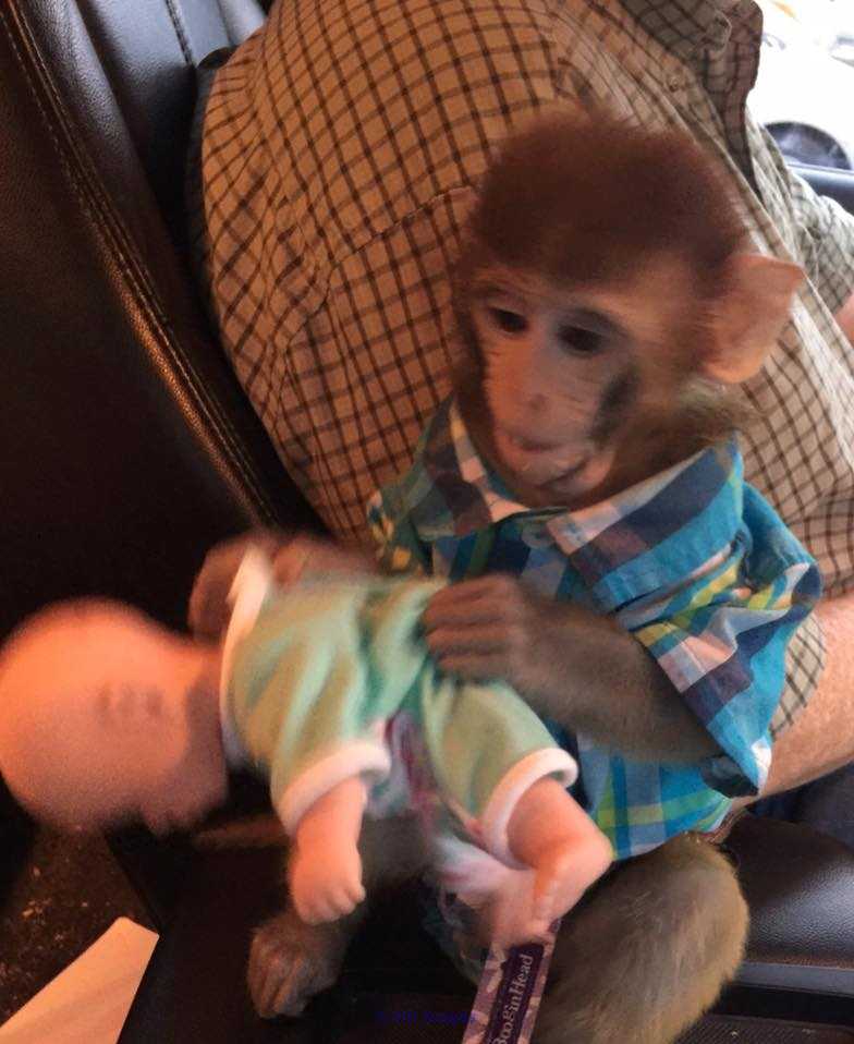 AMAZING BABY MONKEY FOR REHOMING edmonton